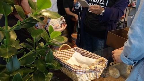 Bên trong quán cà phê nhím độc đáo ở Nhật Bản - 11