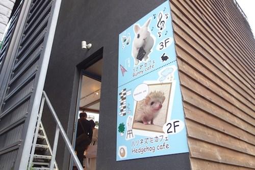Bên trong quán cà phê nhím độc đáo ở Nhật Bản - 1