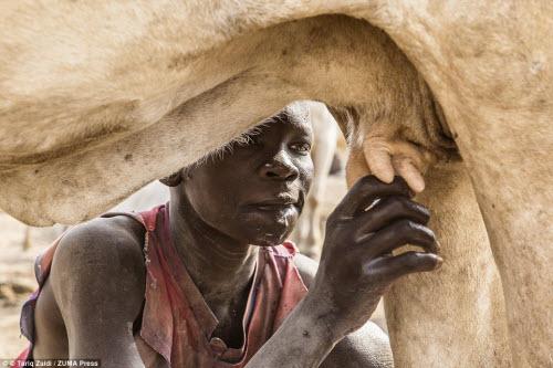 Cuộc sống của bộ tộc dùng nước tiểu của bò để tắm - 2