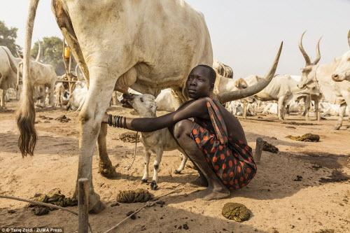 Cuộc sống của bộ tộc dùng nước tiểu của bò để tắm - 6