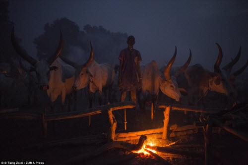 Cuộc sống của bộ tộc dùng nước tiểu của bò để tắm - 11
