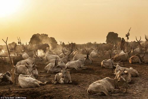 Cuộc sống của bộ tộc dùng nước tiểu của bò để tắm - 14