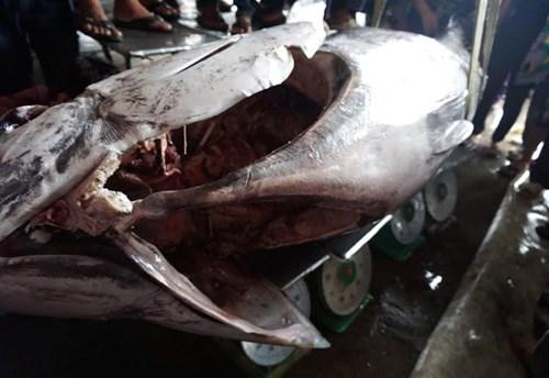 Cận cảnh cá ngừ vây xanh 'khủng' gần 350kg - 6