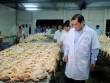 Chủ tịch Đà Nẵng kiểm tra an toàn thực phẩm lúc 1h sáng