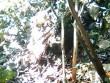 Xác nữ sinh bên bìa rừng: Lời khai đáng sợ của nghi can