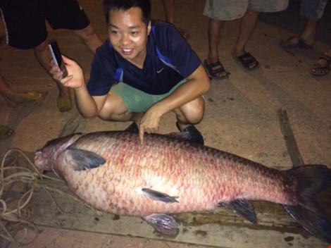 """Bắt được cá trắm """"khủng"""" 61kg ở hồ Núi Cốc - 1"""