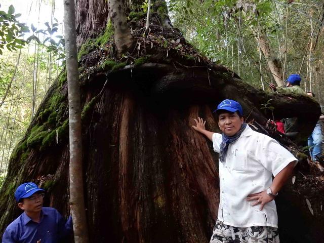 Lạc vào rừng Pơmu nghìn năm tuổi - 1