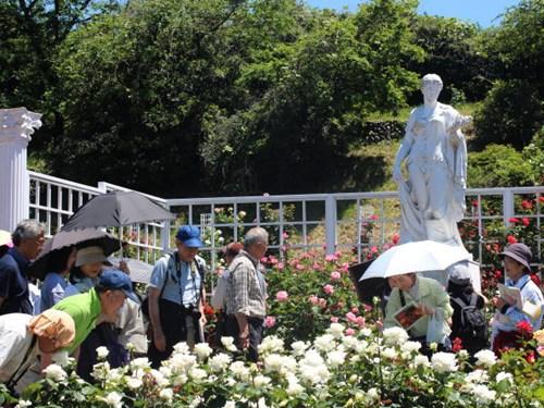 Lạc lối giữa vườn hồng cổ tích ở Nhật - 13