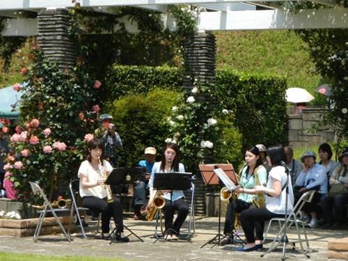 Lạc lối giữa vườn hồng cổ tích ở Nhật - 11