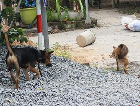Hàng xóm đánh nhau chấn thương sọ não vì.... con chó - 1
