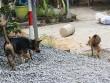 Hàng xóm đánh nhau chấn thương sọ não vì.... con chó