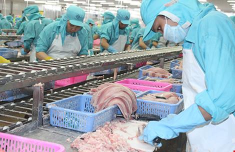 Cá tra Việt chờ Tổng thống Obama bỏ rào cản - 1