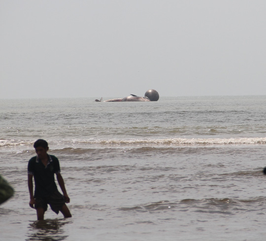 Cận cảnh cá voi khủng chết trôi dạt trên biển Nghệ An - 2