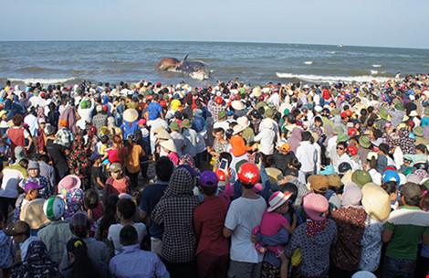 Ngư dân khóc khi an táng cá voi khổng lồ hơn 10 tấn - 1