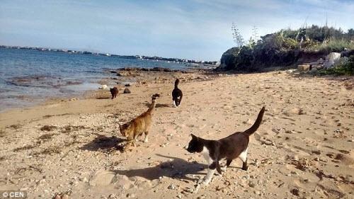Khám phá hòn đảo mèo đông gấp 10 lần người - 1