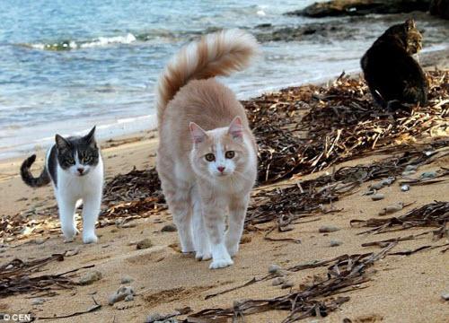 Khám phá hòn đảo mèo đông gấp 10 lần người - 2