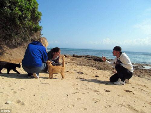Khám phá hòn đảo mèo đông gấp 10 lần người - 3