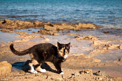 Khám phá hòn đảo mèo đông gấp 10 lần người - 6