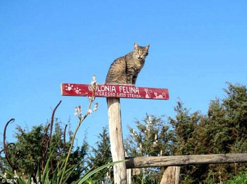 Khám phá hòn đảo mèo đông gấp 10 lần người - 7