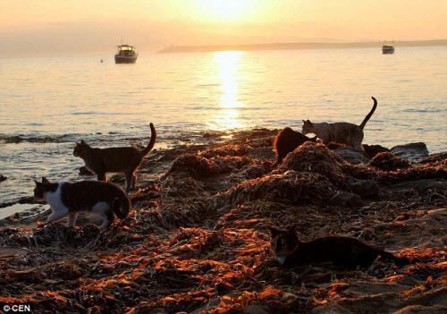 Khám phá hòn đảo mèo đông gấp 10 lần người - 8