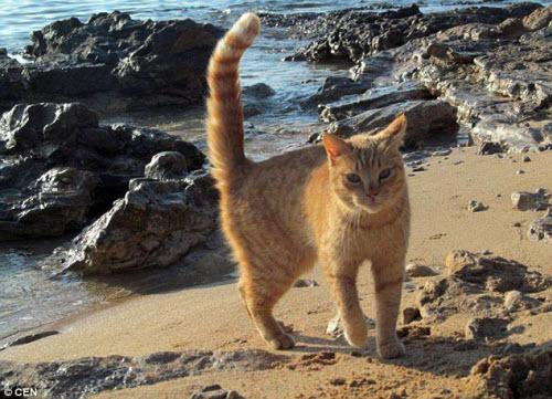 Khám phá hòn đảo mèo đông gấp 10 lần người - 9