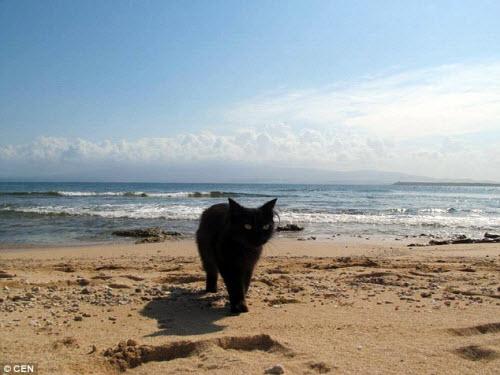 Khám phá hòn đảo mèo đông gấp 10 lần người - 10
