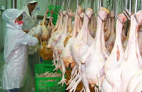 Cấp gần 100 giấy chứng nhận chuỗi thực phẩm an toàn - 1