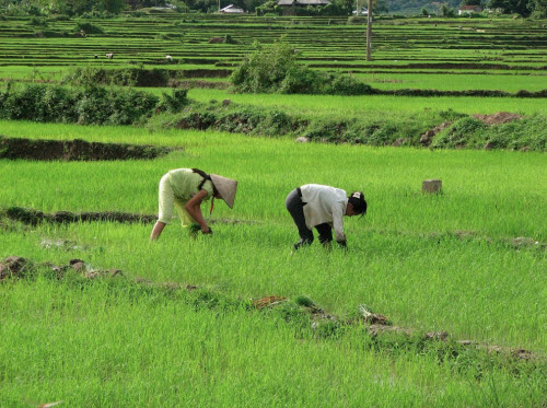 Hành trình 10 ngày khám phá miền núi phía Bắc Việt Nam - 3