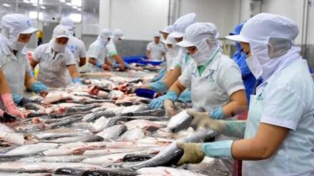 Mỹ cảnh báo hóa chất, kháng sinh trên cá da trơn VN - 1