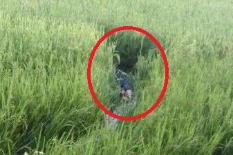 Nam thanh niên tử vong trên bẫy chuột tại ruộng lúa - 1