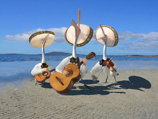 Chúng tôi đánh đàn hát cho biển nghe.
