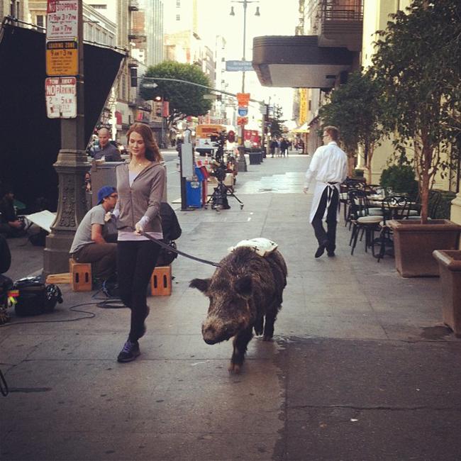 """Em chỉ dắt  """" thú cưng """"  đi dạo thôi mà."""
