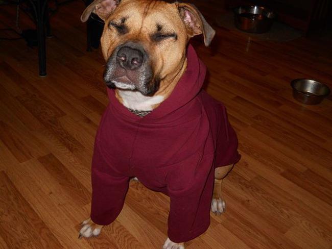 Em khoe áo mới thôi các bác.