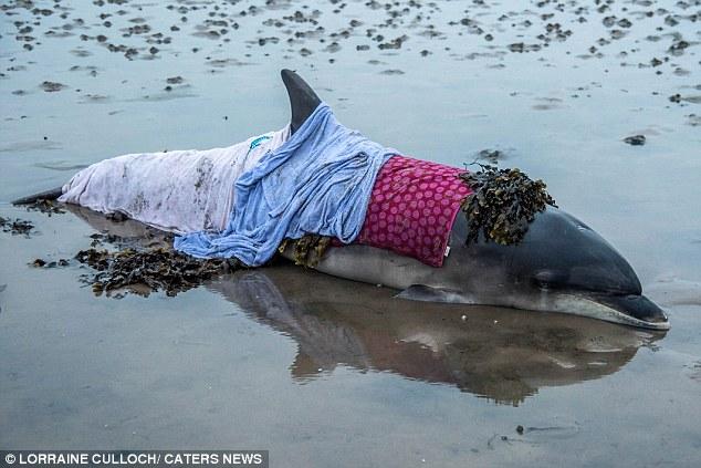 Scotland: Cứu sống cá heo mũi chai mắc cạn - 1