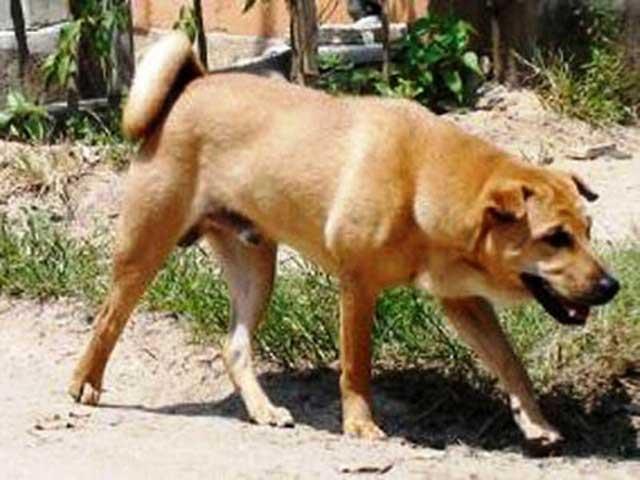 Thanh Hóa: Nhiều người bị chó dại cắn - 1
