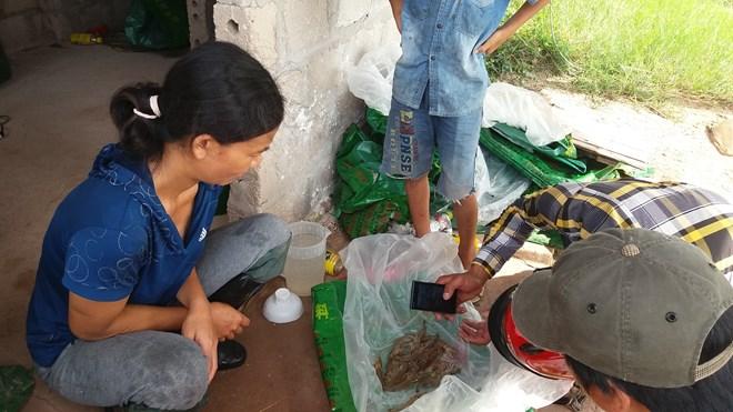 Quảng Ninh: Tôm chết hàng loạt, người nuôi bán vội tôm non - 3