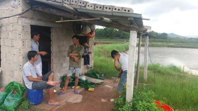 Quảng Ninh: Tôm chết hàng loạt, người nuôi bán vội tôm non - 1