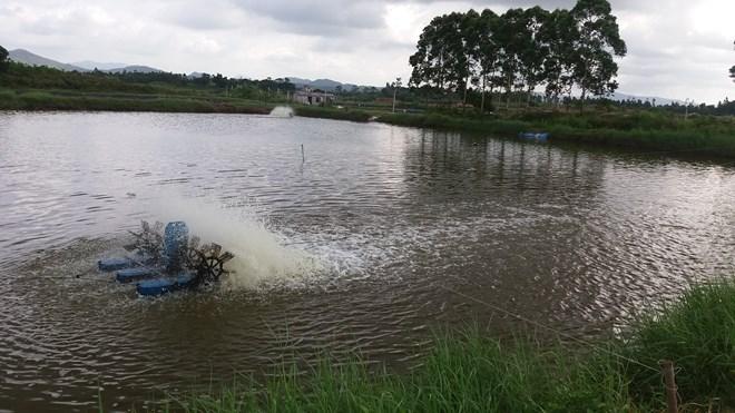 Quảng Ninh: Tôm chết hàng loạt, người nuôi bán vội tôm non - 4