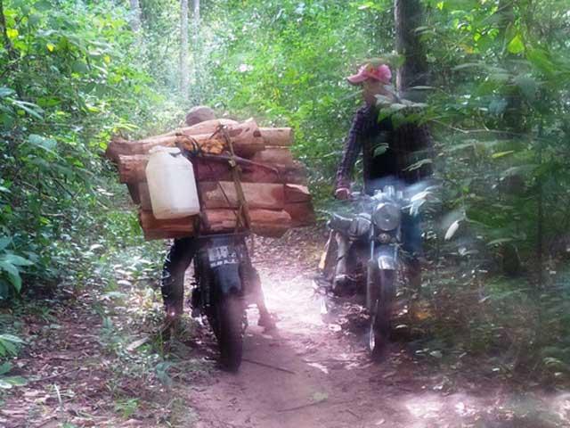 Truy bắt gỗ, 1 lâm tặc chết, 2 kiểm lâm bị thương - 1