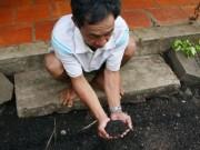 """Video An ninh - Bình Phước: Dân bỏ nhà vì bọ đậu đen """"tấn công"""""""