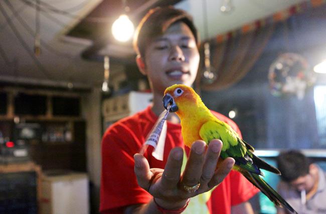 Thú chơi vẹt đuôi dài đắt đỏ nhất thế giới ở Hà Nội - 7