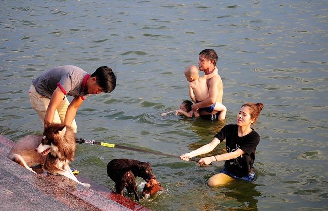 Nắng nóng cực đỉnh, người HN đưa chó cưng ra hồ Tây tắm cùng - 3