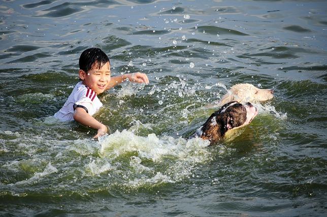 Nắng nóng cực đỉnh, người HN đưa chó cưng ra hồ Tây tắm cùng - 6