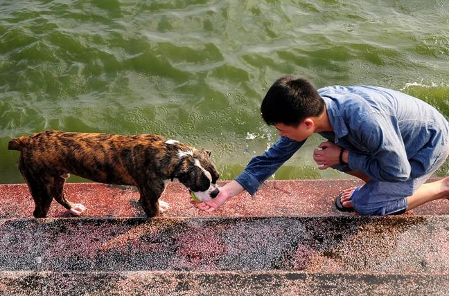 Nắng nóng cực đỉnh, người HN đưa chó cưng ra hồ Tây tắm cùng - 7