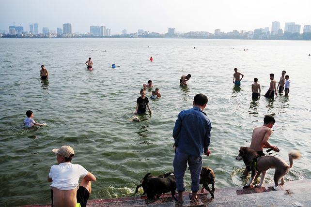 Nắng nóng cực đỉnh, người HN đưa chó cưng ra hồ Tây tắm cùng - 12