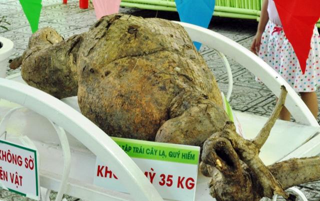 Trái cây khổng lồ hội tụ ở Sài Gòn - 11