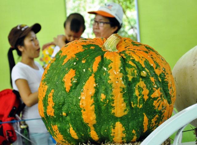 Trái cây khổng lồ hội tụ ở Sài Gòn - 15