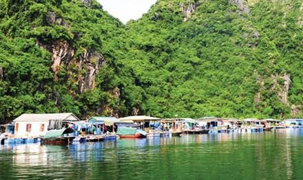 Về làng chài cổ, đẹp nhất thế giới ở vịnh Hạ Long-1