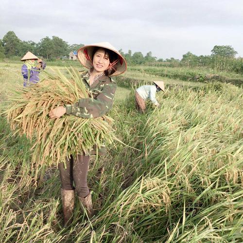 Cô gái xinh đẹp nổi tiếng vì bức hình đi gặt lúa - 2