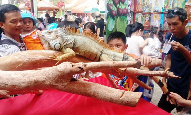 Tận thấy rồng Nam Mỹ, kỳ đà sông Nile trên đất Sài Gòn - 14